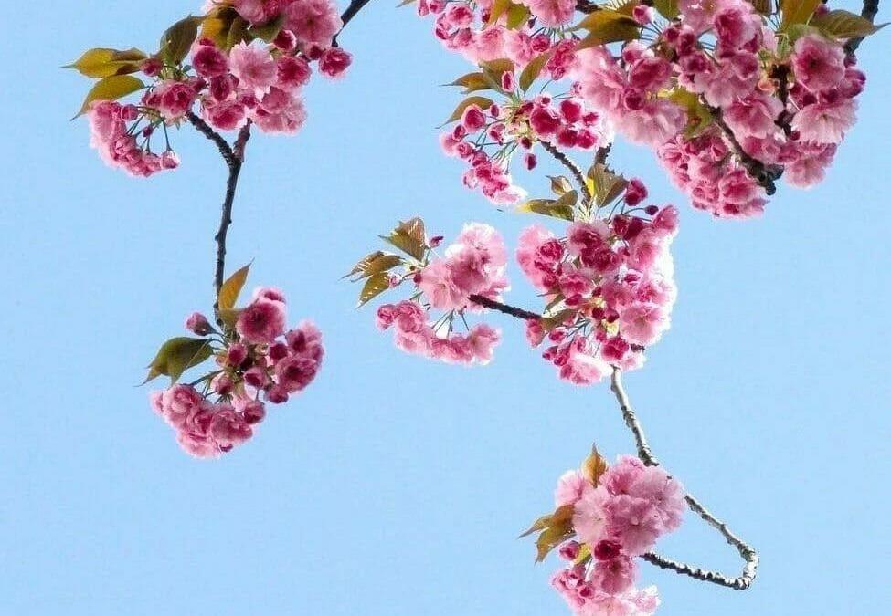 五行針灸師診間小記:生命當如夏花