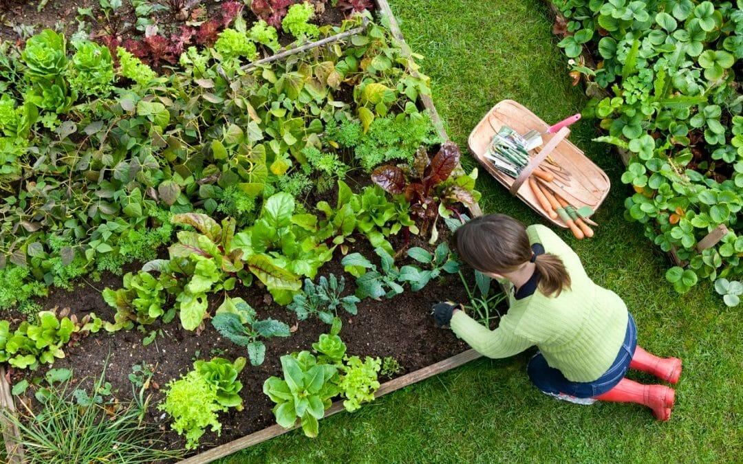 如果每個草坪都變成了可食用的花園怎麼辦?