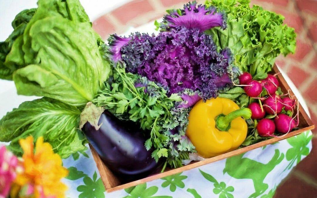 研究證實飲食與2型糖尿病之間的聯繫